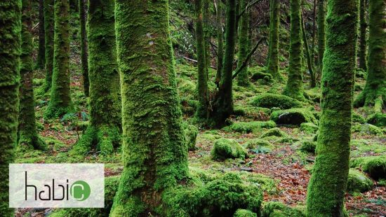 Carbon footprint calculator of the forest sector